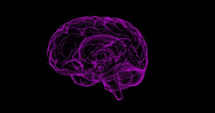 Raised blood pressure and diabetes in mid-life alter brain structure