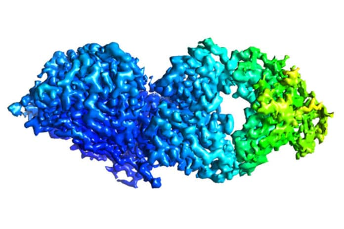 molecular structure of an antibody bound to a protein from influenza B virus