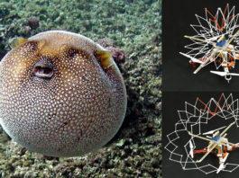 Pufferfish and Pufferbot