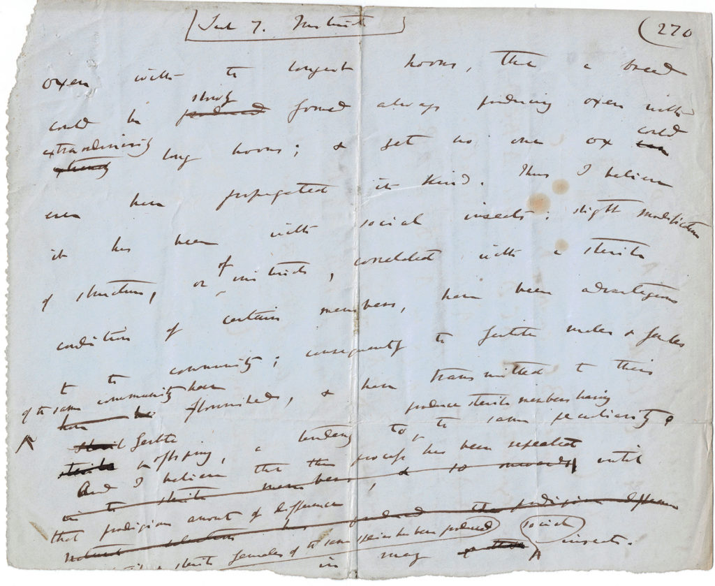 A draft leaf of On the Origin of Species (1858).