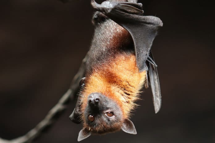 Why do bats fly into walls?