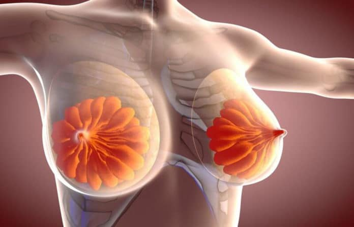 How milk is transported through the mammary network?