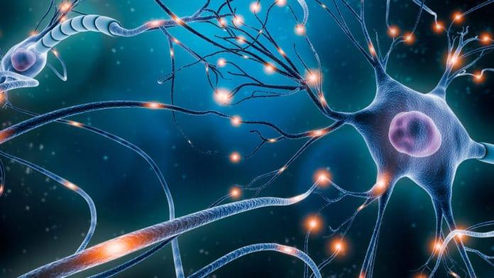 How neurons form long-term memories?