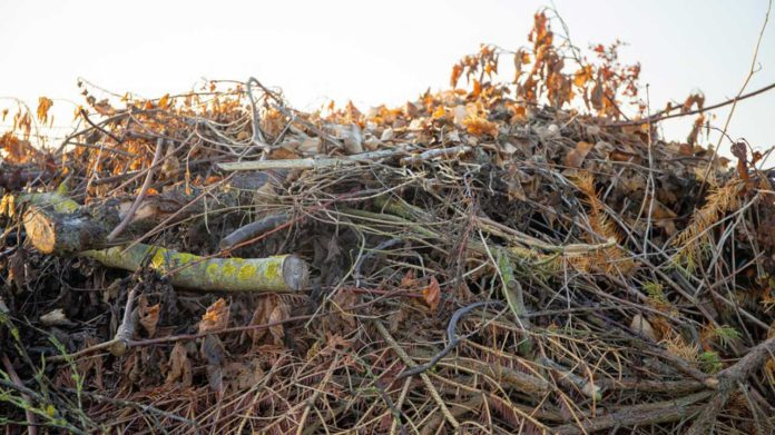 Organic waste from agroforestry is a good example of large scale biomass
