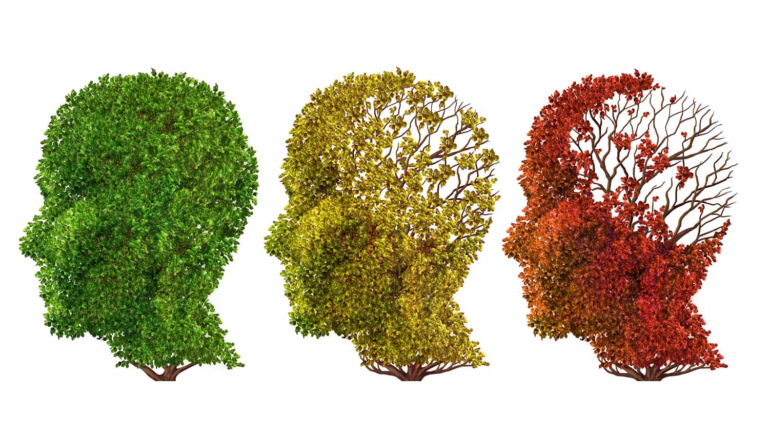 Age-Related Brain Decline Could be Reversible, Study Says