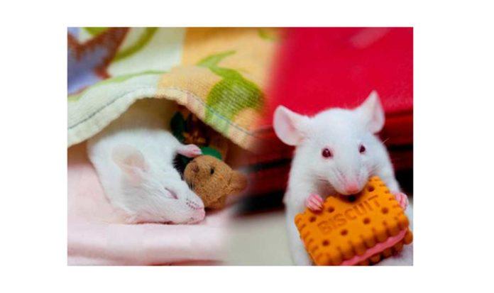 How the brain paralyzes while sleeping?