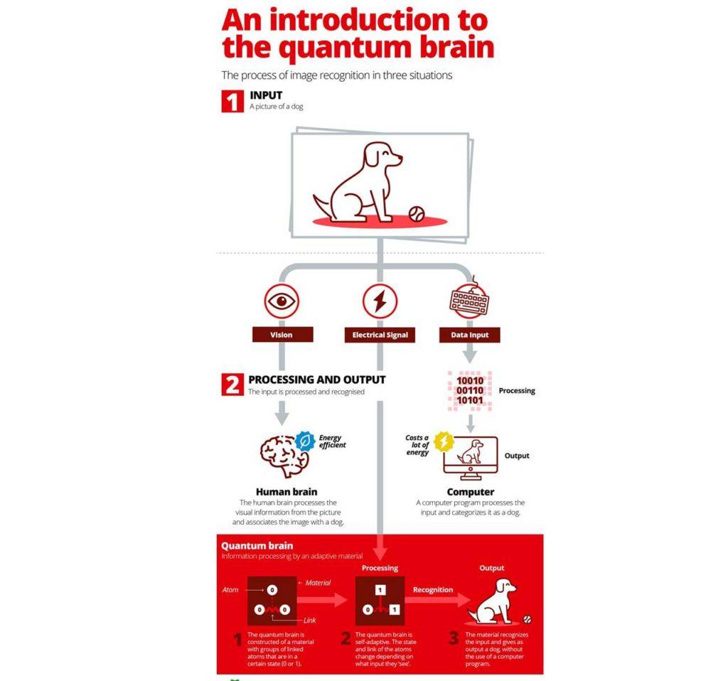 Introduction to Quantum brain