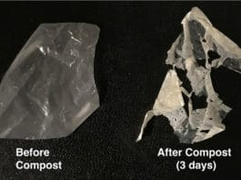 A modified plastic (left) breaks down after just three days in standard compost (right) and entirely after two weeks