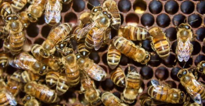 Bees can tell time by temperature
