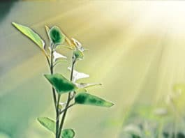 Ancient origins of photosynthesis: Revealing the mysteries
