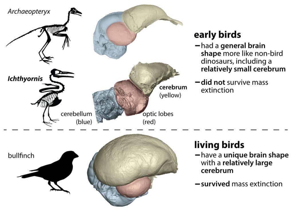 The ancestors of living birds