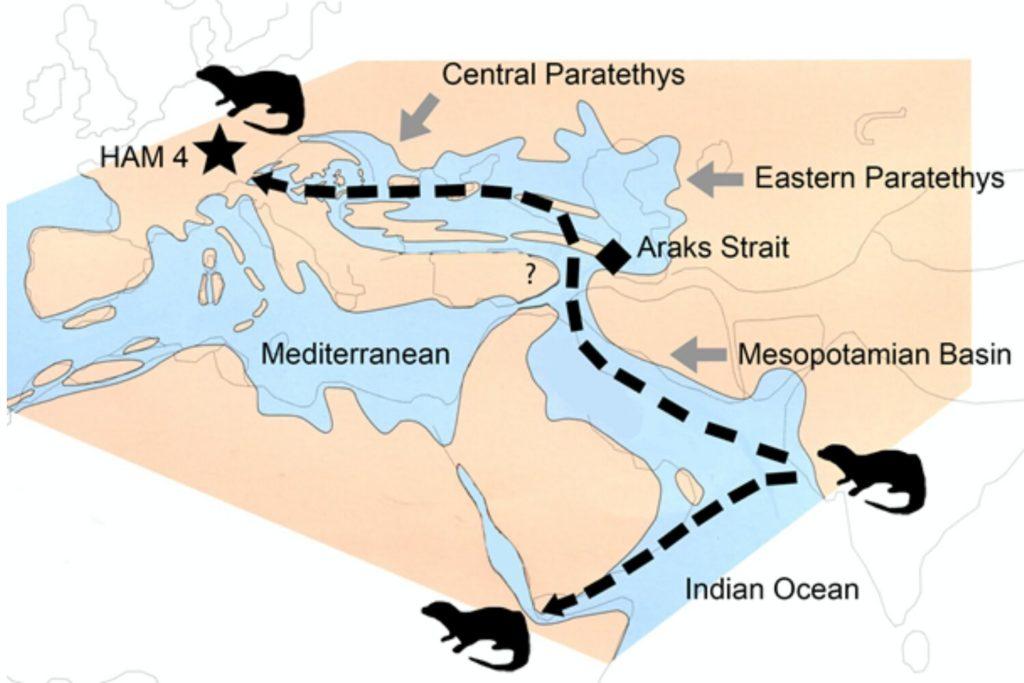 dispersal of the Vishnuonyx otters