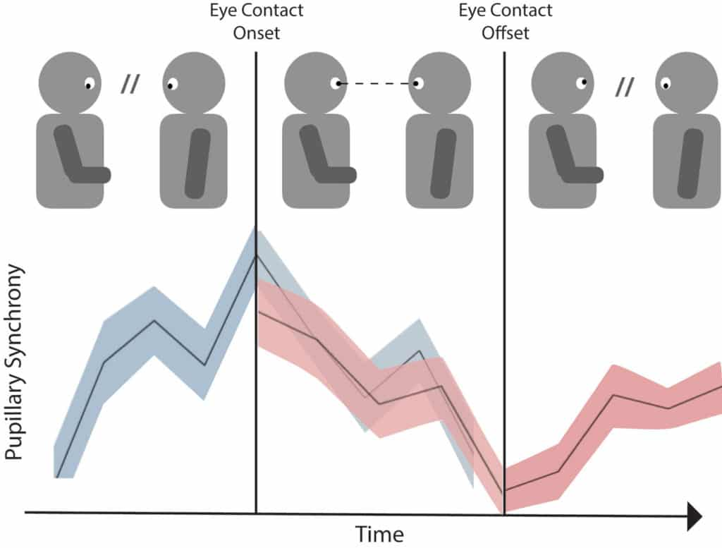 Cartoon of how a single instance of eye contact coincides with pupillary synchrony