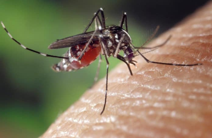 Image showing mosquito